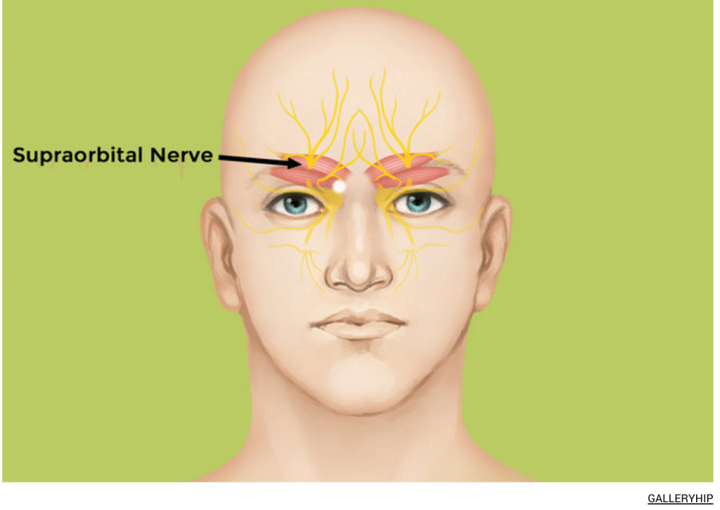 Well Figure about The Effect of Supraorbital Nerve To Influence How To Fall Asleep Fast