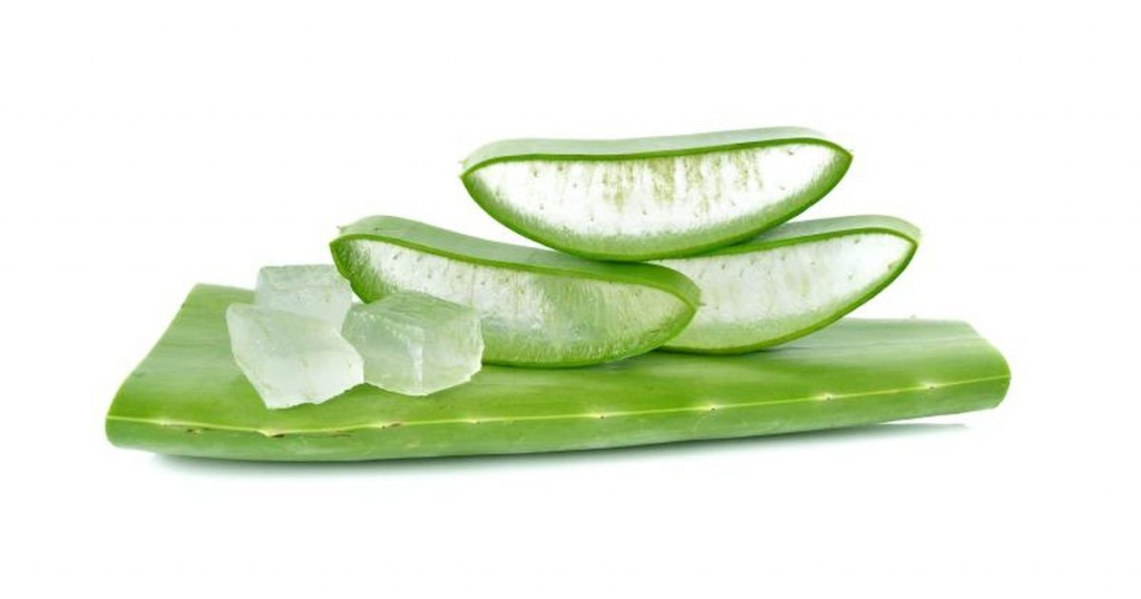 Fresh Green Aloe Vera with Transperent Inner as Hemorrhoids Natural Remedies