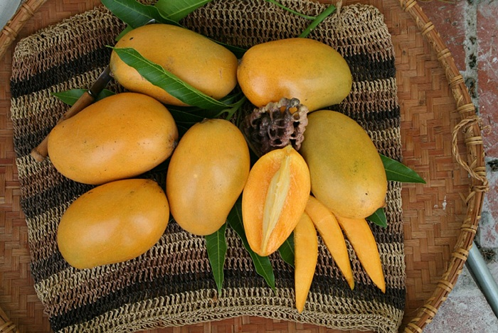 Fresh Mango on Bamboo Basket Used as Ayuverdic Medicine to Cute Hemorrhoids