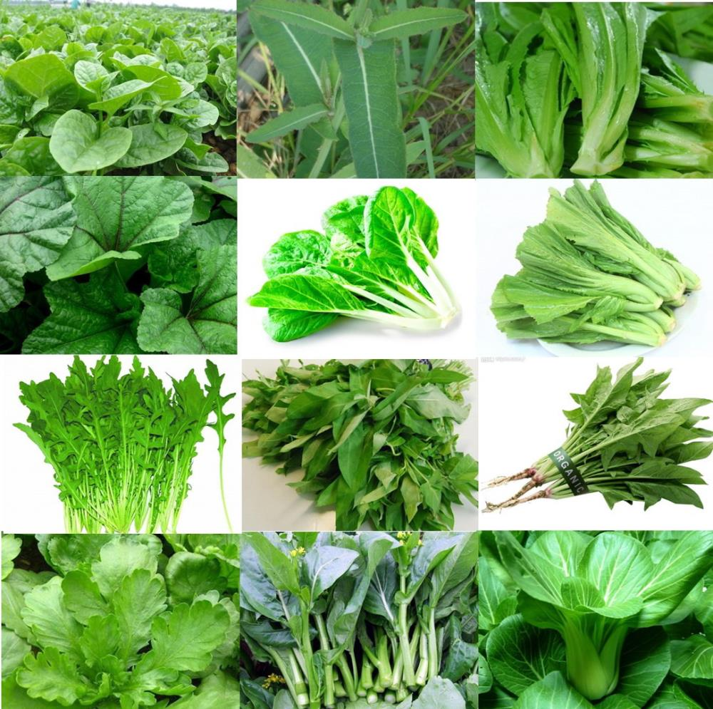 greenleafyvegetables1